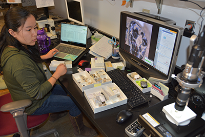 A graduate student works digitizing fossilized teeth for inclusion in the collection catalog.